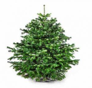 Aktion Weihnachtsbaum
